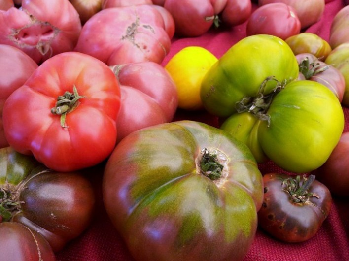 Heirloom Tomatoes (c) 2012 Jennifer Duque